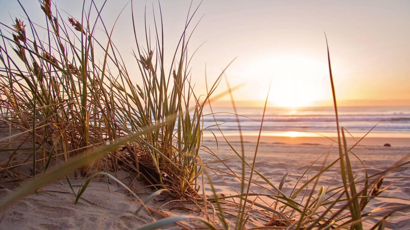piante-spiaggia-sole